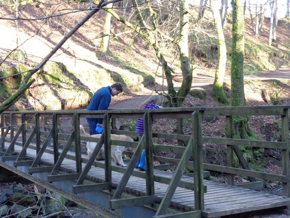 Den of Alyth playing 'Pooh Sticks'